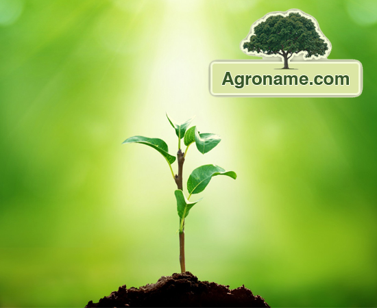 Agroname.com - Farmers' Social Network